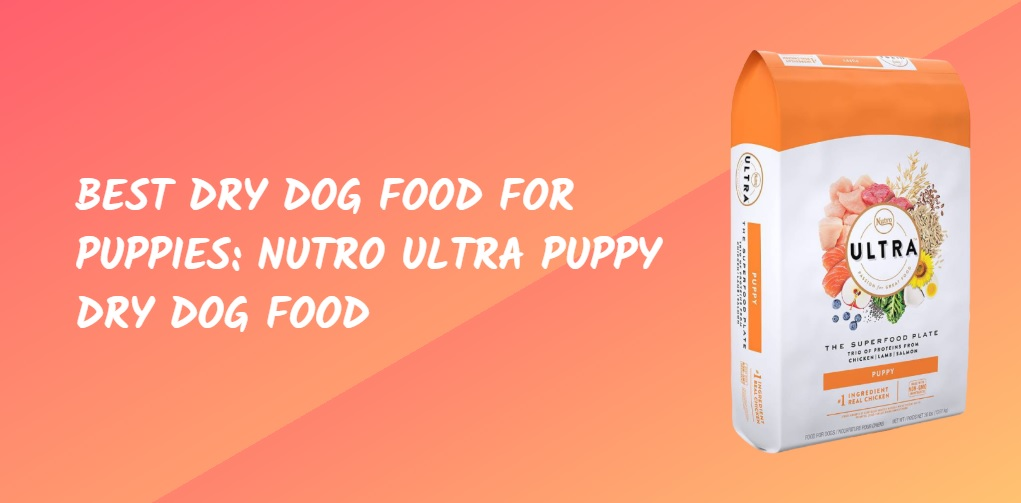 Best Dry Dog Food For Puppies Nutro Ultra Puppy Dry Dog Food